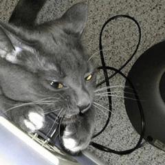 Как защитить провода в доме от грызунов и домашних животных?
