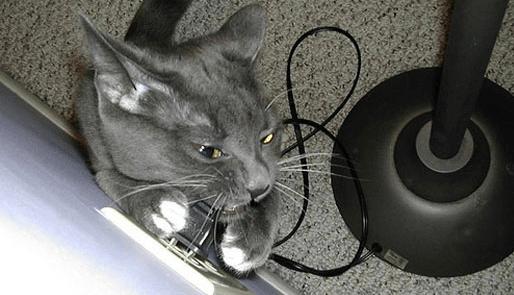 Опасная ситуация - кот грызет шнур