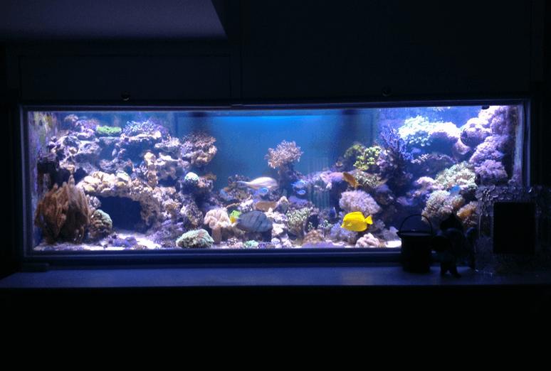 Современная подводная подсветка