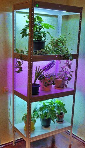 Досветка комнатных растений