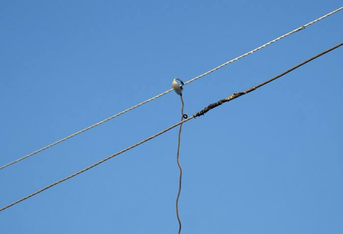 Ответственность за несанкционированное подключение к электросети