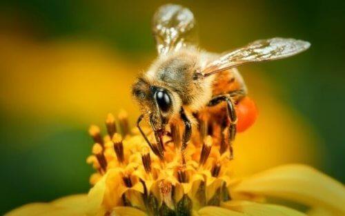 Пчёла на цветке