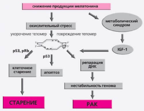 Последствия снижения мелатонина